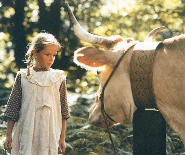 Cows 607