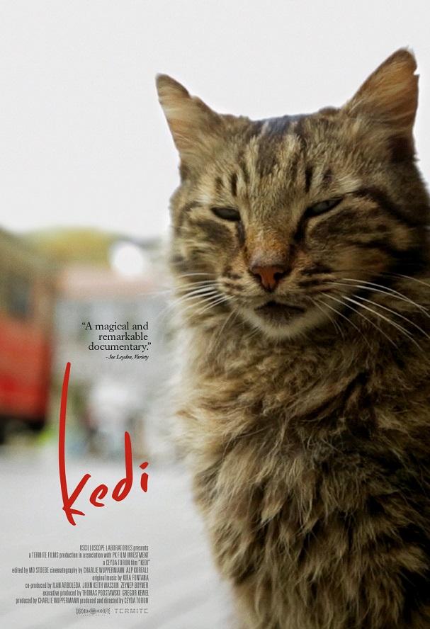 Kedi poster 607