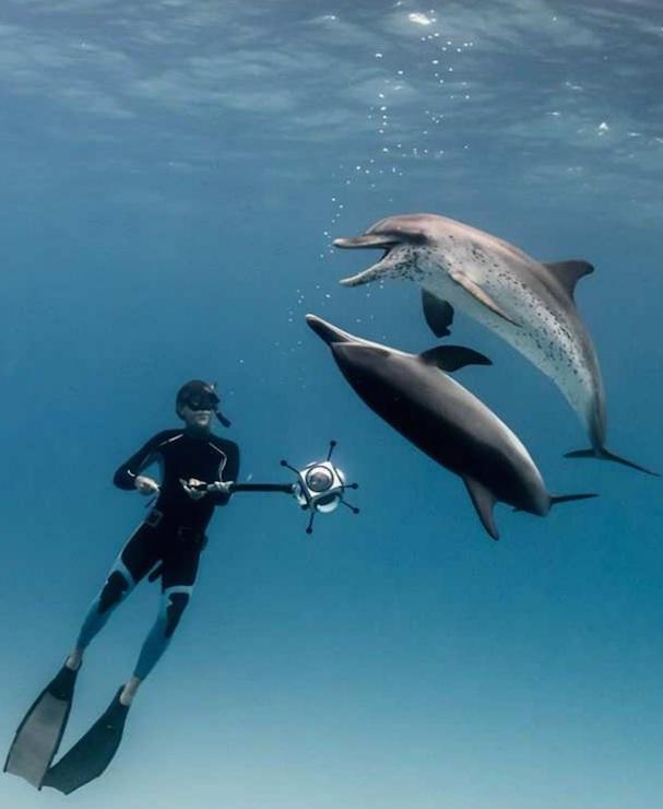 Dolphin Man 607