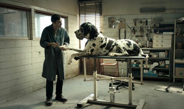 dogman 607