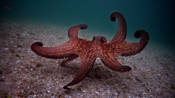 My Octopus Teacher 607