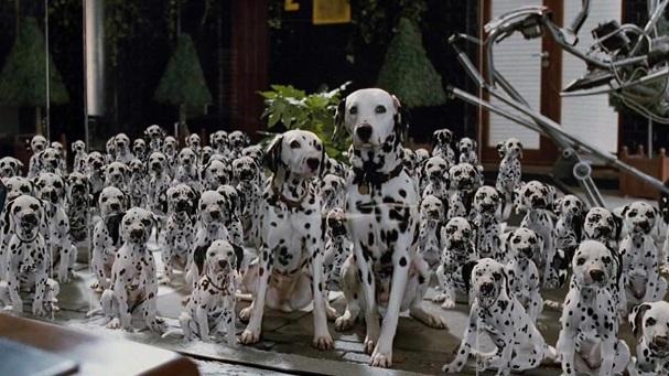 101 dalmatians 607