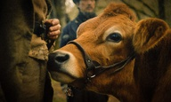 Η Ενωση Κριτικών της Νέας Υόρκης ψηφίζει το «First Cow» της Κέλι Ράιχαρντ ως την καλύτερη ταινία του 2020