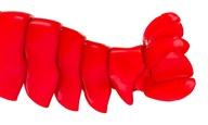 «The Pianist and the Lobster»: Το νέο «ντοκιμαντέρ» του Ερολ Μόρις, διαβάζεται στους New York Times