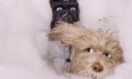 Δείτε πώς γυρίστηκε το «Isle of Dogs» του Γουές Αντερσον