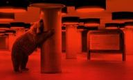 Berlinale 2017: 20 πράγματα για να περιμένεις από το Φεστιβάλ Βερολίνου