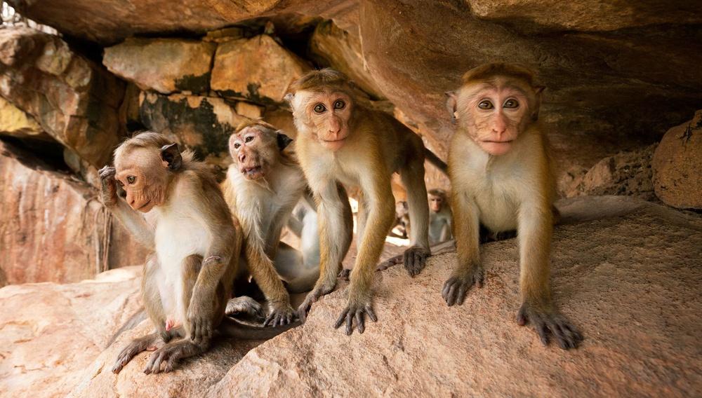 Το Βασίλειο Των Μαϊμούδων
