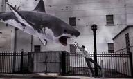 Προσοχή! Βρέχει καρχαρίες!