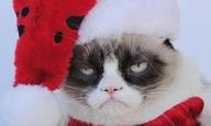 H Grumpy Cat έχει τη δική της... χειρότερα δεν γίνεται ταινία!