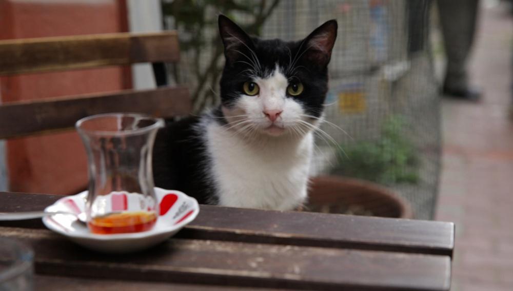 Οι γάτες της Κωνσταντινούπολης έχουν το δικό τους ντοκιμαντέρ – Δείτε το αξιολάτρευτο τρέιλερ!