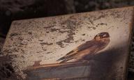 Θα είναι πολλά τα Οσκαρ; Δείτε το τρέιλερ για την «Καρδερίνα» του Τζόν Κρόουλι βασισμένη στο best-seller της Ντόνα Ταρτ