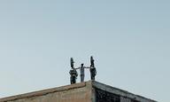 Η Αθηνά Τσαγγάρη κι ο Γιώργος Λάνθιμος σκηνοθετούν για το Φεστιβάλ Βενετίας