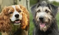 Αυτά είναι τα αληθινά σκυλάκια, όλα από καταφύγια, που πρωταγωνιστούν στο live-action «Η Λαίδη κι ο Αλήτης» της Disney
