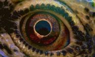 Η Κέιτ Μπλάνσετ μας ξεναγεί στα μυστήρια του σύμπαντος: Τρέιλερ για το «Voyage of Time» του Τέρενς Μάλικ