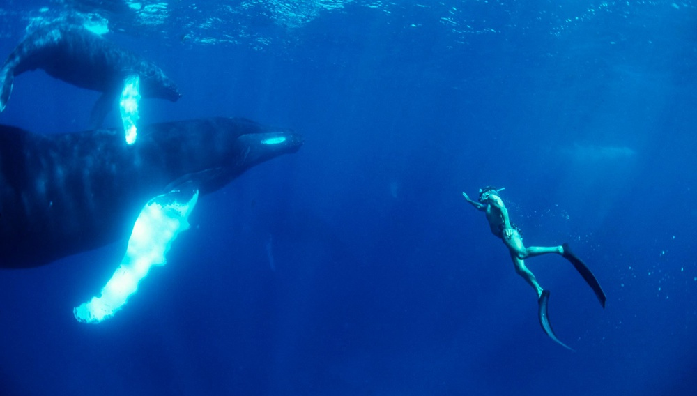 «Mπορούμε να πάμε βαθύτερα»: Μαθήματα ζωής στο teaser του «Dolphin Man» του Λευτέρη Χαρίτου