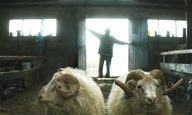 Κάννες 2015: Στο «Rams» το μεγάλο βραβείο του Un Certain Regard