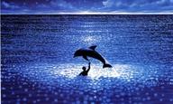 To δελφίνι του «Απέραντου Γαλάζιου», πήγε στον μεγάλο ωκεανό του ουρανού.