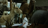 Το 21ο Φεστιβάλ Nτοκιμαντέρ Θεσσαλονίκης διερωτάται: «Γιατί να κοιτάζουμε τα ζώα;»
