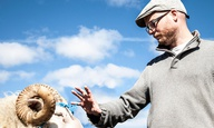 O Γκρίμουρ Χακόναρσον είναι ο Ισλανδός που έκανε αυτήν την υπέροχη ταινία με τα κριάρια!