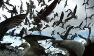 «Leviathan»: Ενα ντοκιμαντέρ τόσο επικό όσο κι ο Μόμπι Ντικ