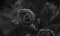 Φεστιβάλ Δράμας 2019: «Πλαστικά Λουλούδια» του Γιάννη Ζαφείρη