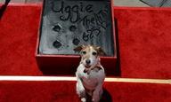 Τα πατουσάκια του Αγκι στο χολιγουντιανό Walk of Fame