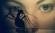 «Phase IV» του Σολ Μπας: Από τον Χίτσκοκ στην επανάσταση των μυρμηγκιών!