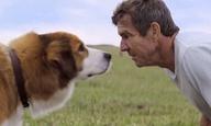 «Α Dog's Purpose»: Το βίντεο που σοκάρει, η πρεμιέρα που ακυρώθηκε, η ταινία που έγινε διάσημη για τους λάθους λόγους