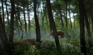 Οnline πρεμιέρα για τα «Μικρά Ομορφα Αλογα» του Μιχάλη Κωνσταντάτου