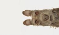 O Γουές Αντερσον παρουσιάζει αυτοπροσώπως τη νέα του ταινία με τίτλο «Isle of Dogs»