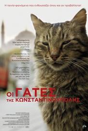 Οι Γάτες της Κωνσταντινούπολης